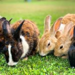 Dozens of mammals could be susceptible to SARS-CoV-2