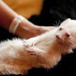 First case of #coronavirus detected in wild animal