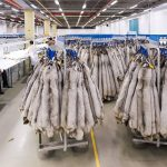 All #Finland #mink farms to be tested for #Sarscov2