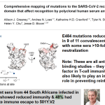 Study of convalescent sera from 44 South Africans infected in first wave, >90% showed reduced immunity & 48% had complete immune escape to 501Y.V2