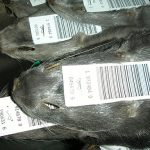 #Denmark EPA: Contamination from the mink graves must be removed due to #coronavirus