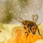 High pollen count linked to #coronavirus infection rates