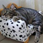 Italy: domestic cat diagnosed with B.1.1.7 UK variant of #coronavirus