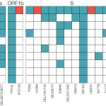 Europe: B.1.620 #coronavirus variant - definitely one to watch