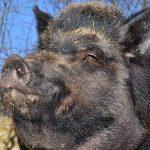Croatia: no evidence of #coronavirus spillover into wildlife or zoo animals found so far