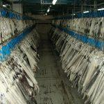 USA: Oregon considers mink farm ban to prevent #coronavirus transmission