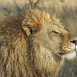 USA: ZooTampa vaccinates animals against #coronavirus
